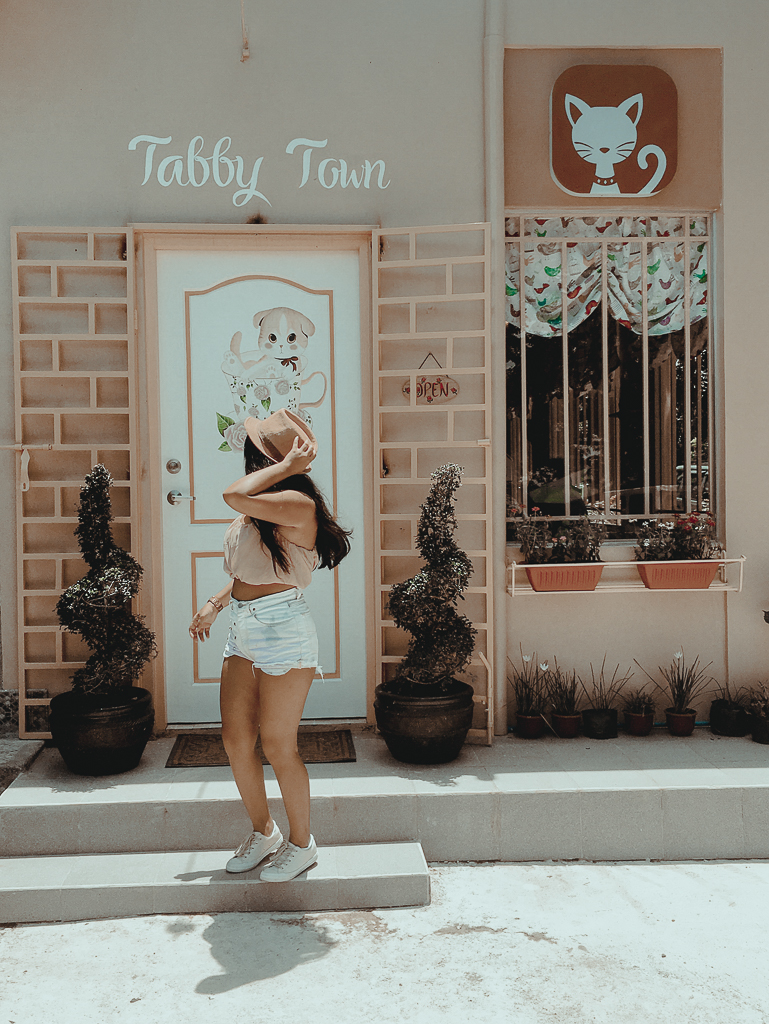 Tabby Town Cat Cafe Tagaytay