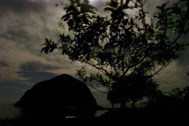 fireflies mararison island antique philippines